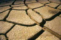 In the Sechura desert, the earth cracks in the heat of summer.