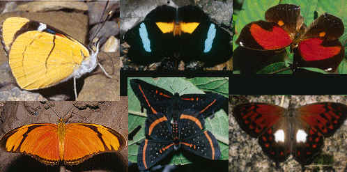 Butterflies/Mariposas